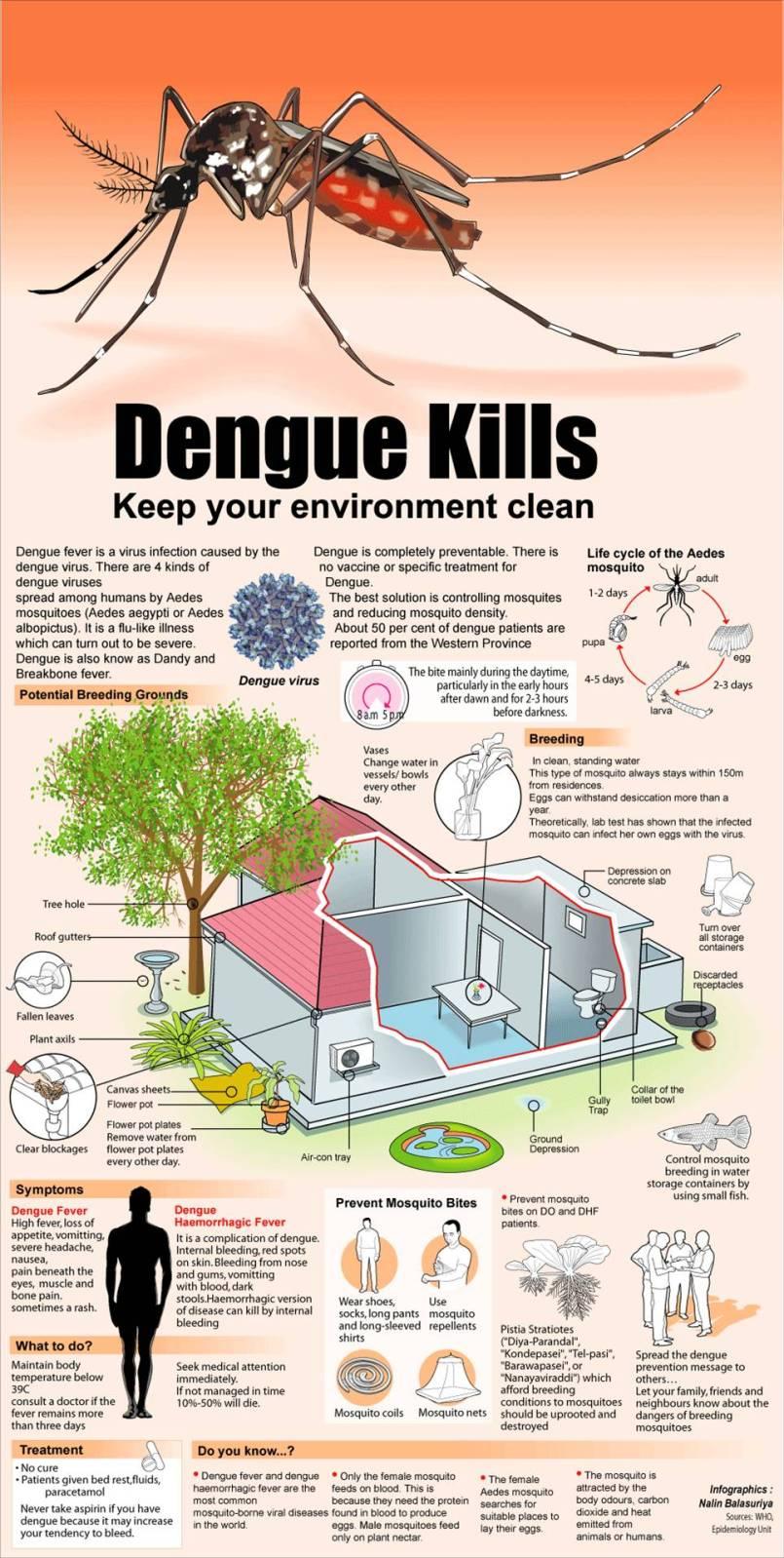 how to prevent dengue